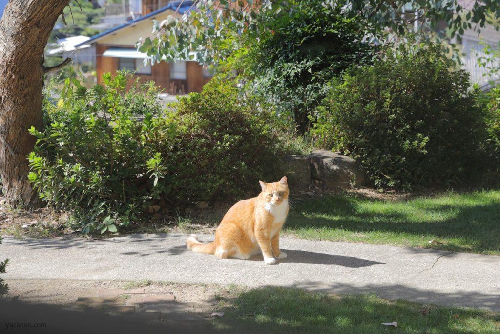 尾道向島の珈琲と季節菓子nagiの猫